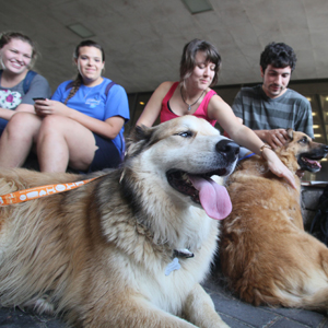 Students take a break with rescue dogs outside of the Linus A. Sims Memorial Library at Southeastern Louisiana University.  (Southeastern Louisiana University Office of Public Information)