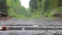 Close-up of the Cross Kirkland Corridor, a former railroad right of way extending through the entire city of Kirkland, Washington  (Elsa Steele)