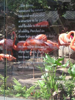 Poetry at the flamingo exhibit at New Orleans Zoo
