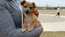 Employee Holding Small Dog Outside University Library at Texas A&M-San Antonio