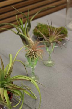 The terrariums can be made with plants and moss.