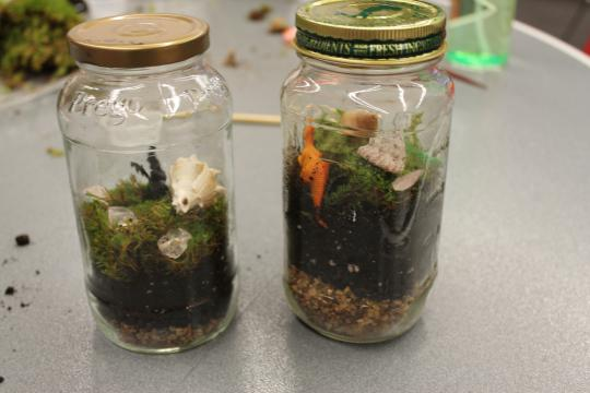 Two terrariums are next to each other, both with seashells.